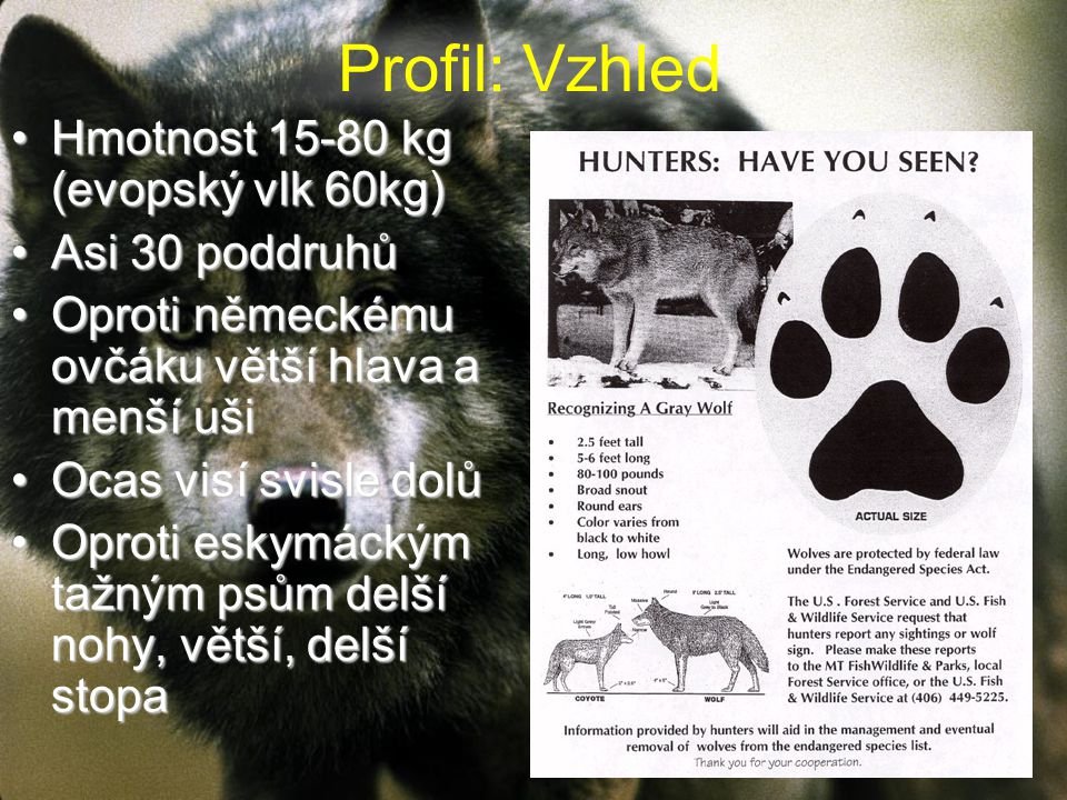 Profil: Vzhled Hmotnost 15-80 kg (evopský vlk 60kg) Asi 30 poddruhů