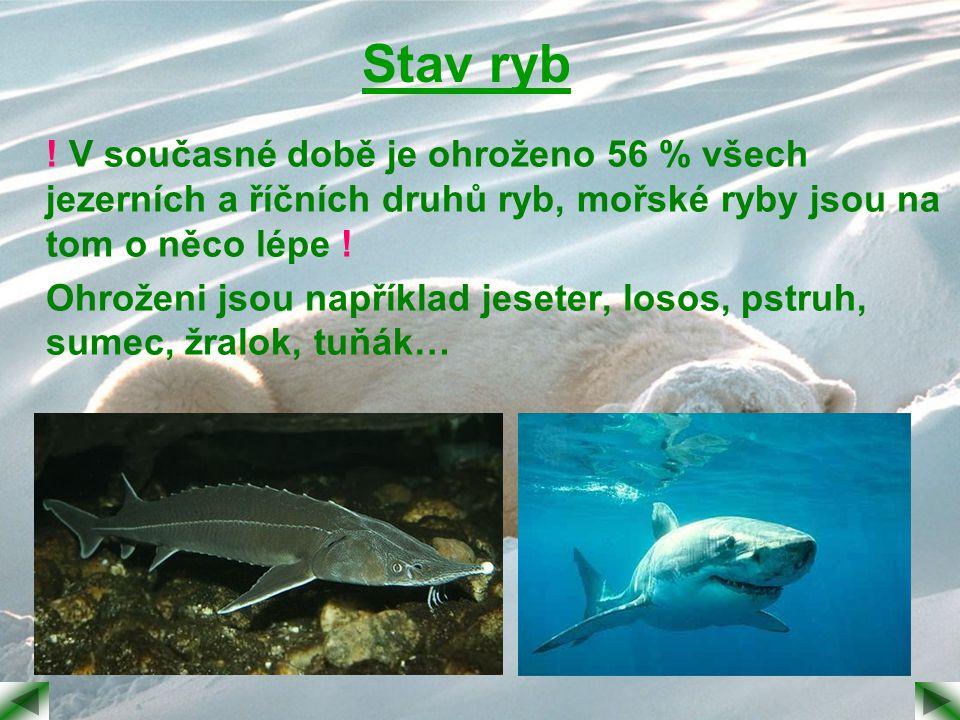 Stav ryb ! V současné době je ohroženo 56 % všech jezerních a říčních druhů ryb, mořské ryby jsou na tom o něco lépe !