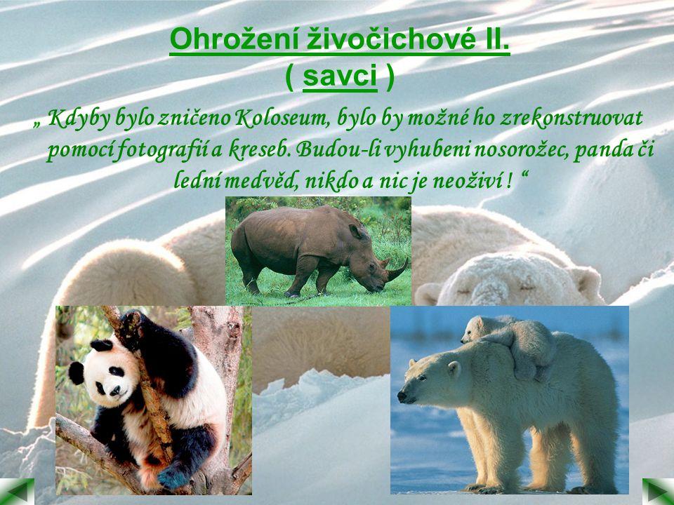 Ohrožení živočichové II. ( savci )