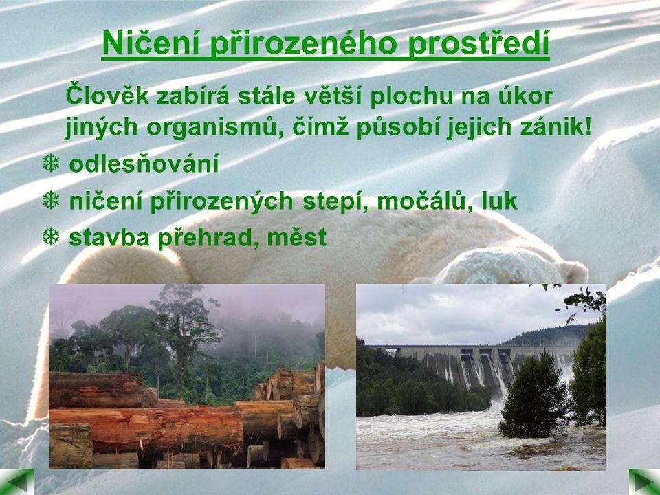 Ničení přirozeného prostředí
