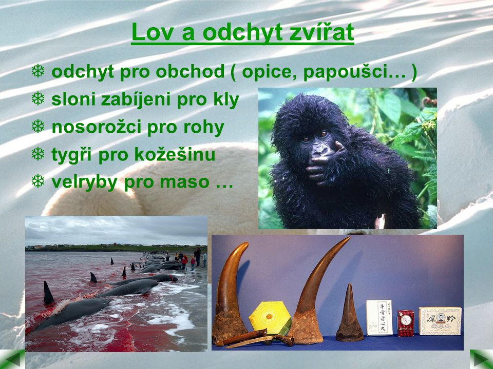 Lov a odchyt zvířat  odchyt pro obchod ( opice, papoušci… )