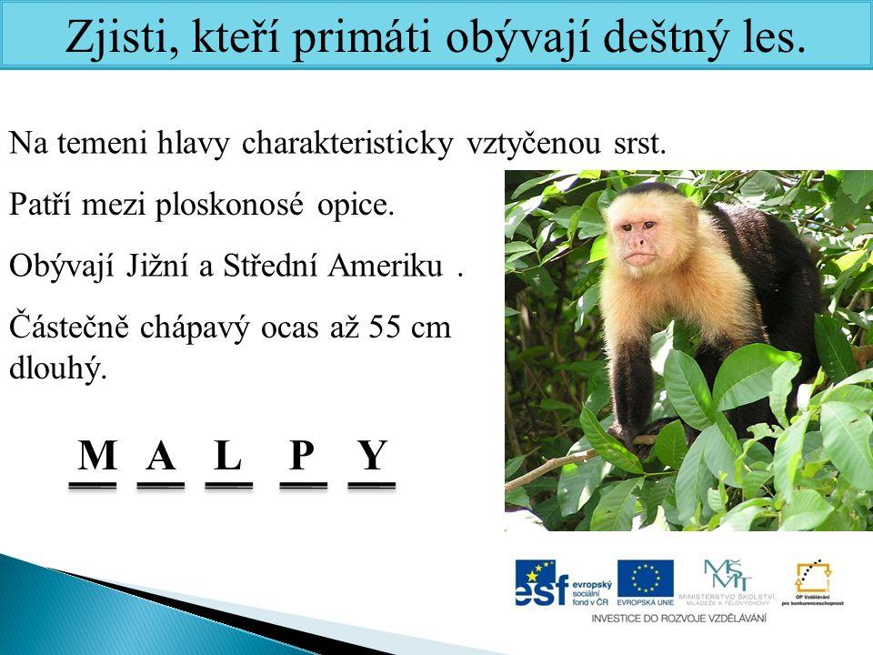 Zjisti, kteří primáti obývají deštný les.