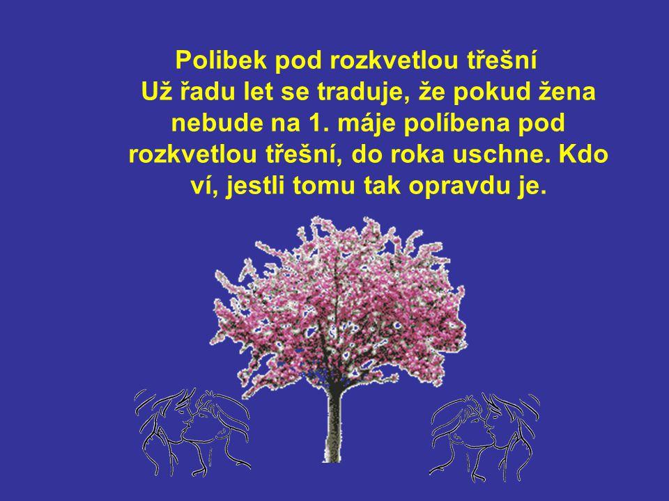 Polibek pod rozkvetlou třešní Už řadu let se traduje, že pokud žena nebude na 1.