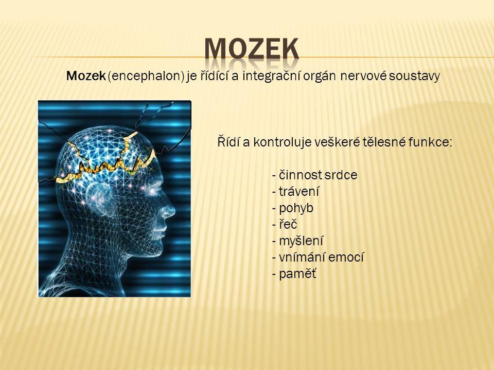 Mozek (encephalon) je řídící a integrační orgán nervové soustavy