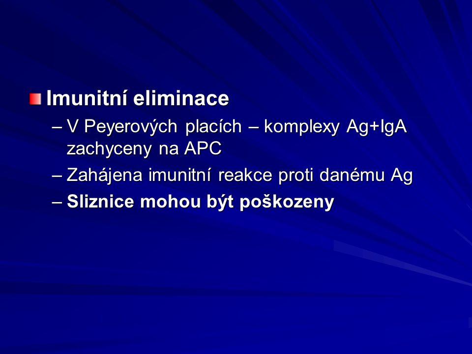 Imunitní eliminace V Peyerových placích – komplexy Ag+IgA zachyceny na APC. Zahájena imunitní reakce proti danému Ag.