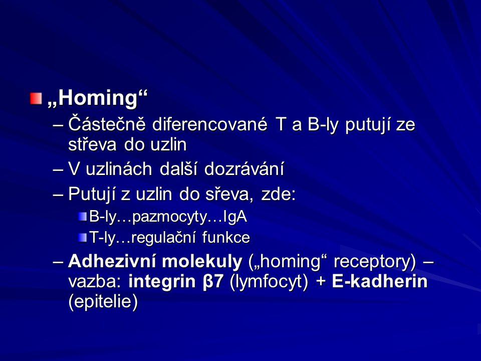 """""""Homing Částečně diferencované T a B-ly putují ze střeva do uzlin"""