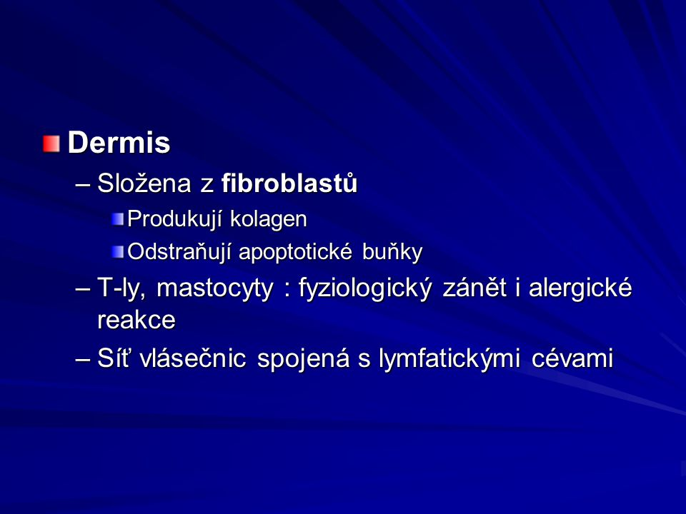 Dermis Složena z fibroblastů