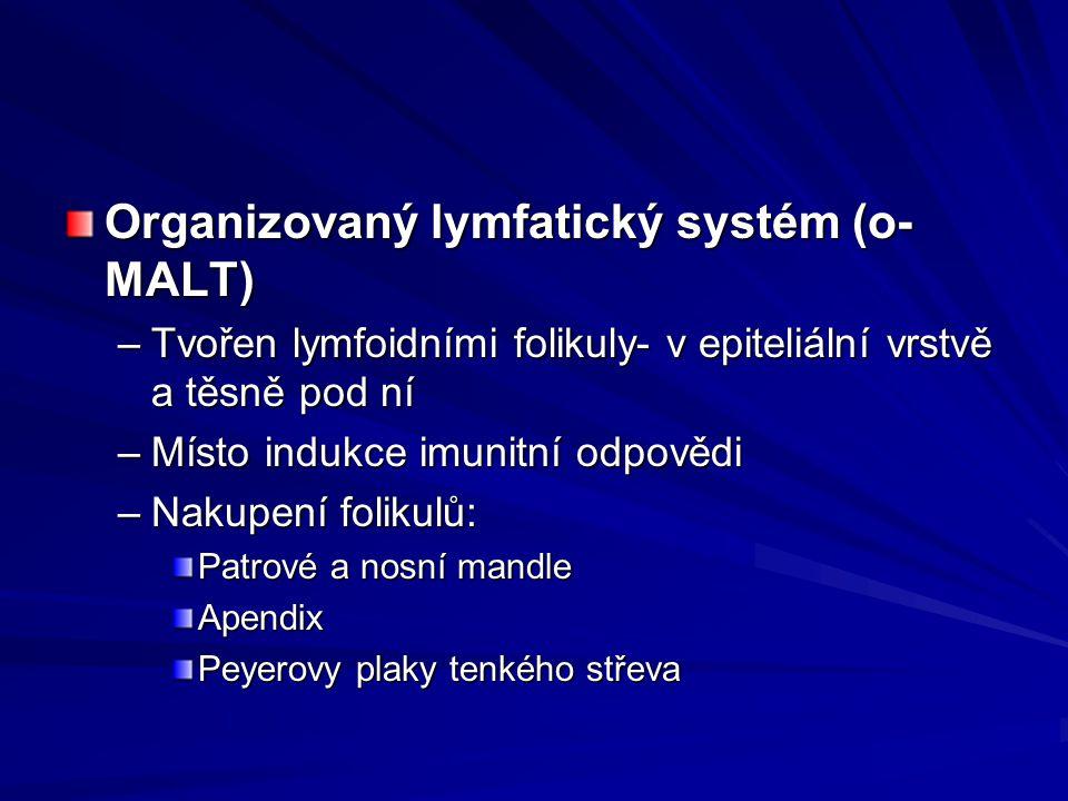 Organizovaný lymfatický systém (o-MALT)