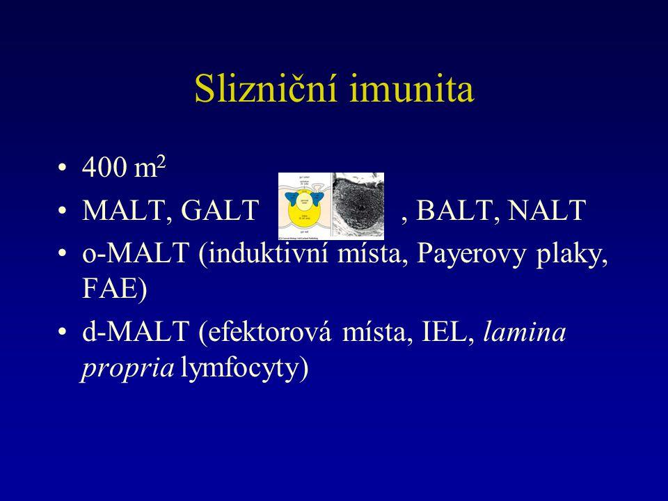 Slizniční imunita 400 m2 MALT, GALT , BALT, NALT