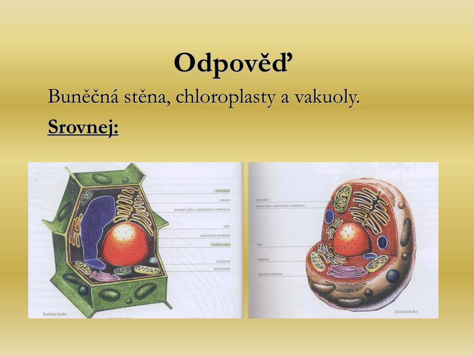 Odpověď Buněčná stěna, chloroplasty a vakuoly. Srovnej: