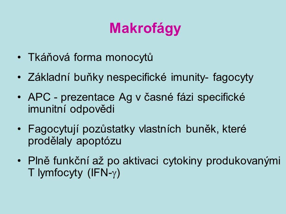 Makrofágy Tkáňová forma monocytů