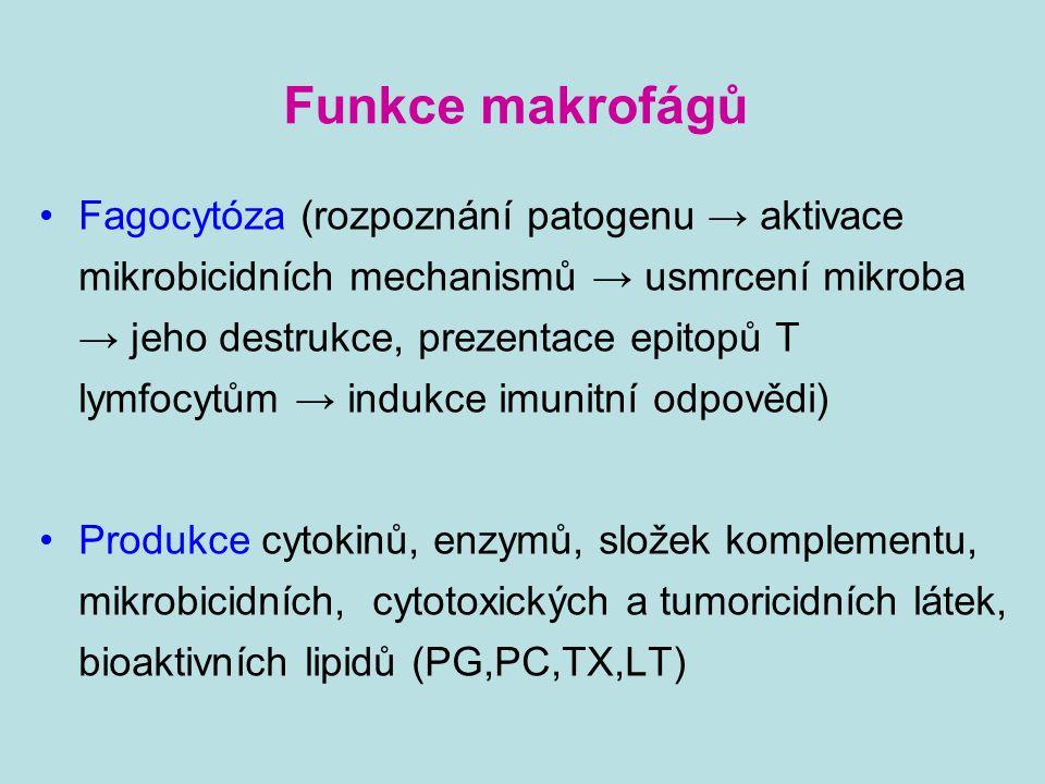 Funkce makrofágů