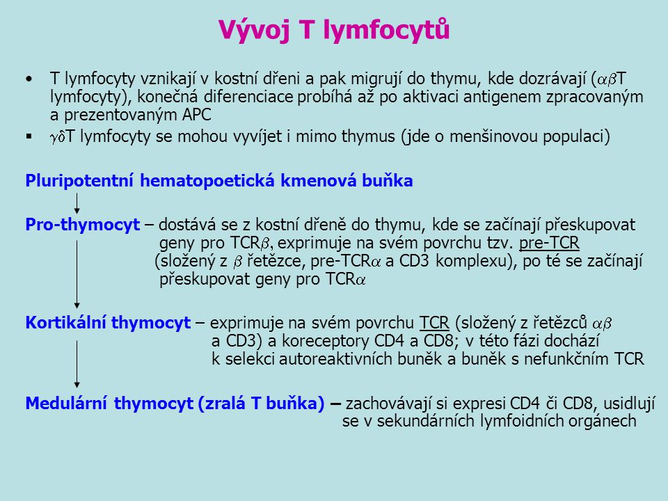 Vývoj T lymfocytů