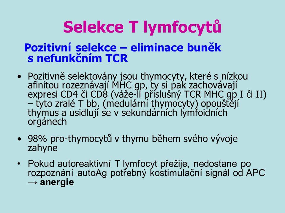 Selekce T lymfocytů Pozitivní selekce – eliminace buněk s nefunkčním TCR.