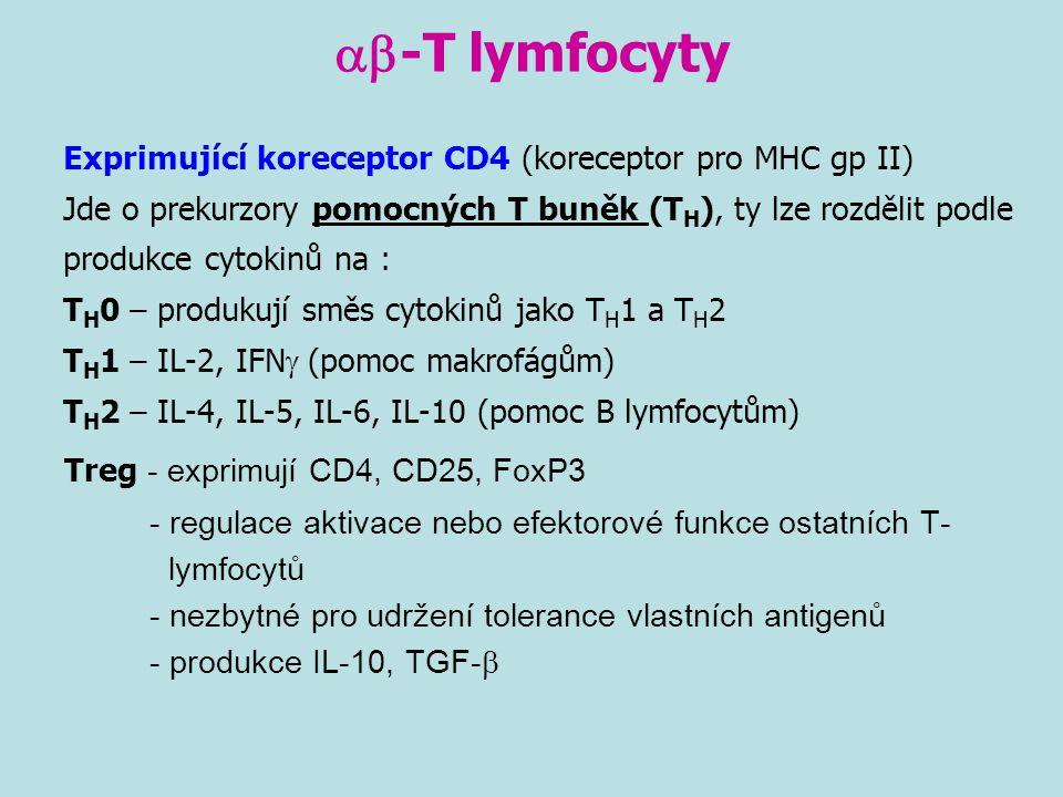 ab-T lymfocyty Treg - exprimují CD4, CD25, FoxP3