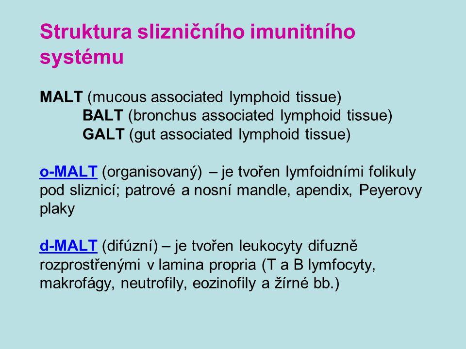 Struktura slizničního imunitního systému MALT (mucous associated lymphoid tissue) BALT (bronchus associated lymphoid tissue) GALT (gut associated lymphoid tissue) o-MALT (organisovaný) – je tvořen lymfoidními folikuly pod sliznicí; patrové a nosní mandle, apendix, Peyerovy plaky d-MALT (difúzní) – je tvořen leukocyty difuzně rozprostřenými v lamina propria (T a B lymfocyty, makrofágy, neutrofily, eozinofily a žírné bb.)