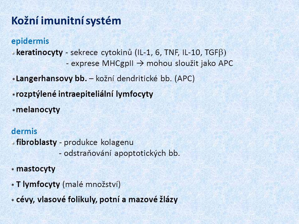 Kožní imunitní systém epidermis