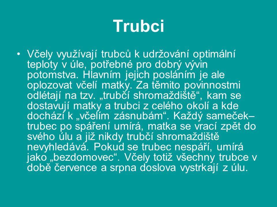 Trubci