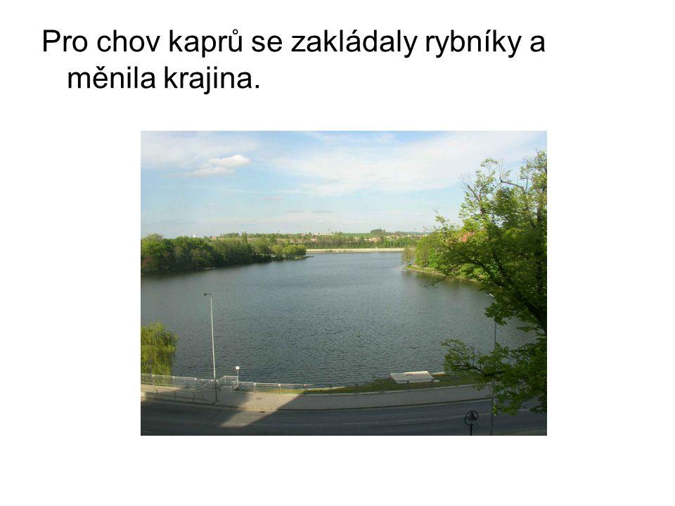 Pro chov kaprů se zakládaly rybníky a měnila krajina.