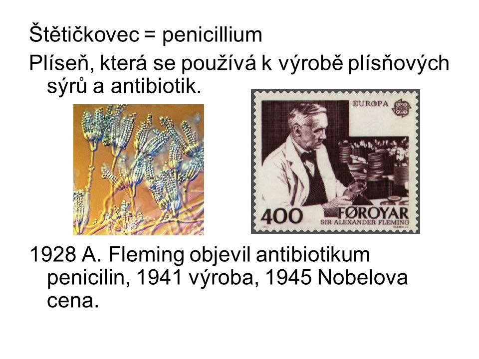 Štětičkovec = penicillium