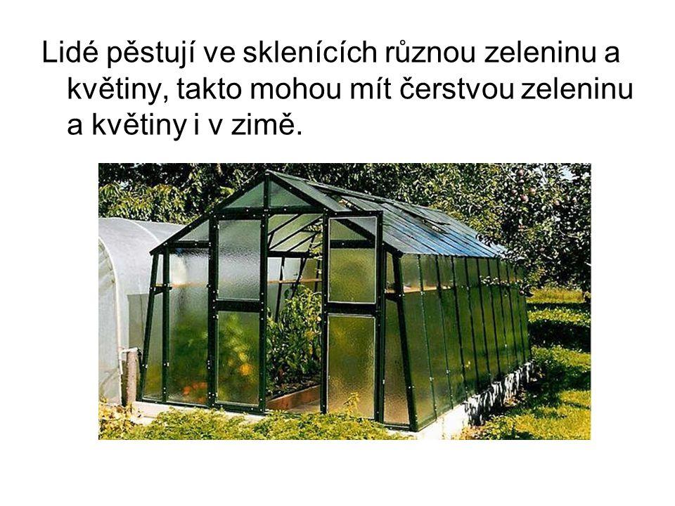 Lidé pěstují ve sklenících různou zeleninu a květiny, takto mohou mít čerstvou zeleninu a květiny i v zimě.