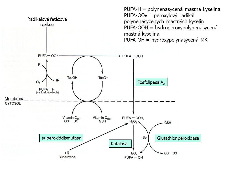 PUFA-H = polynenasycená mastná kyselina