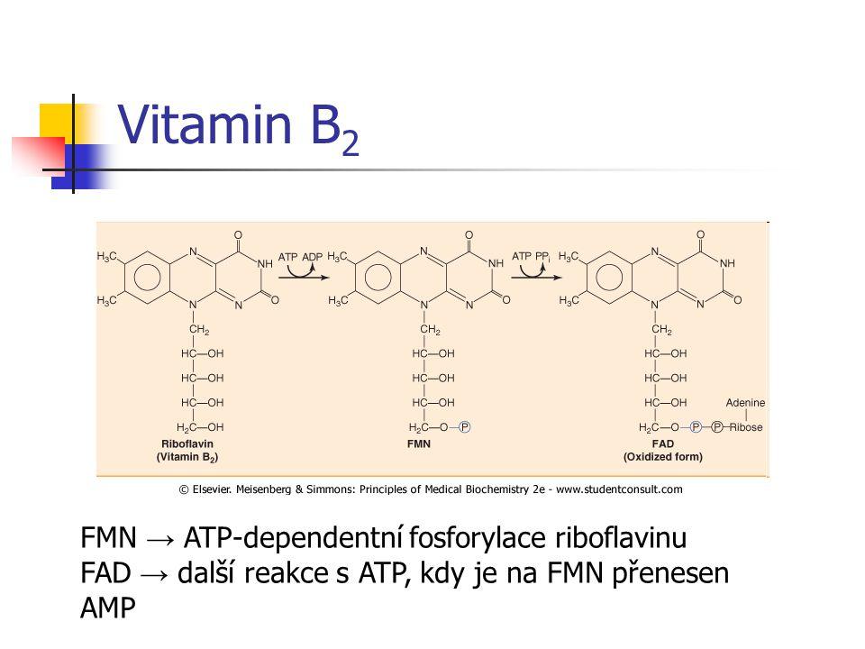 Vitamin B2 FMN → ATP-dependentní fosforylace riboflavinu