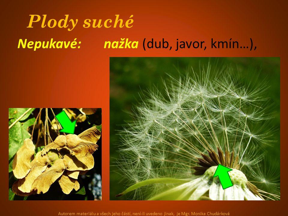 Plody suché Nepukavé: nažka (dub, javor, kmín…),