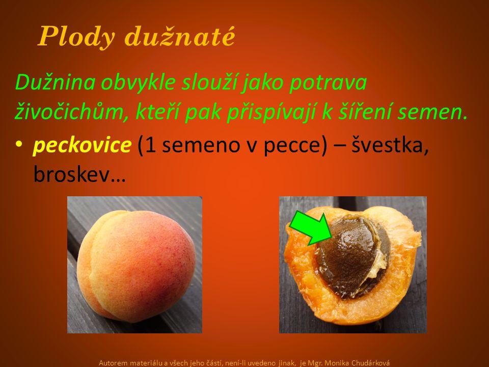 Plody dužnaté Dužnina obvykle slouží jako potrava živočichům, kteří pak přispívají k šíření semen.