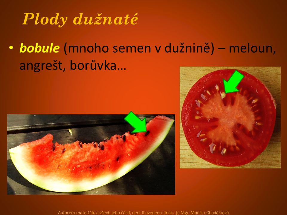 Plody dužnaté bobule (mnoho semen v dužnině) – meloun, angrešt, borůvka…