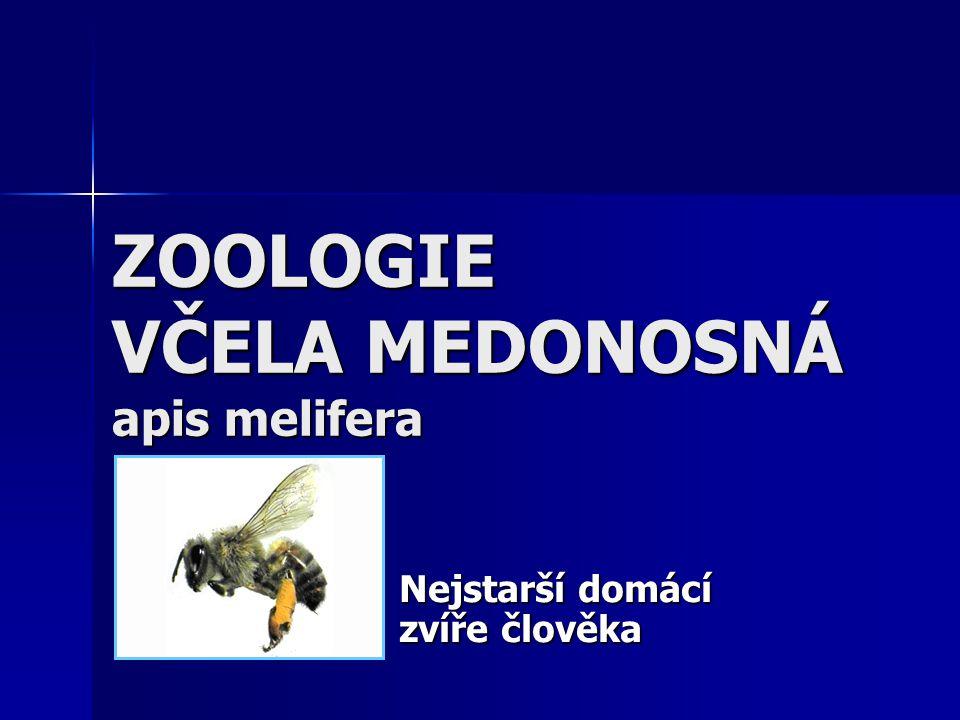 ZOOLOGIE VČELA MEDONOSNÁ apis melifera