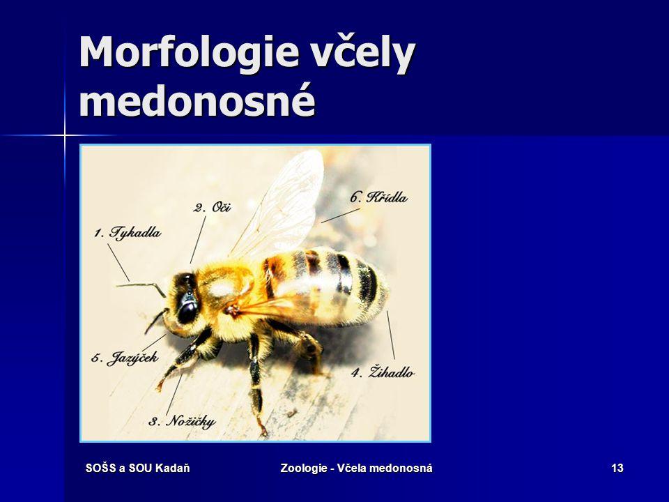 Morfologie včely medonosné