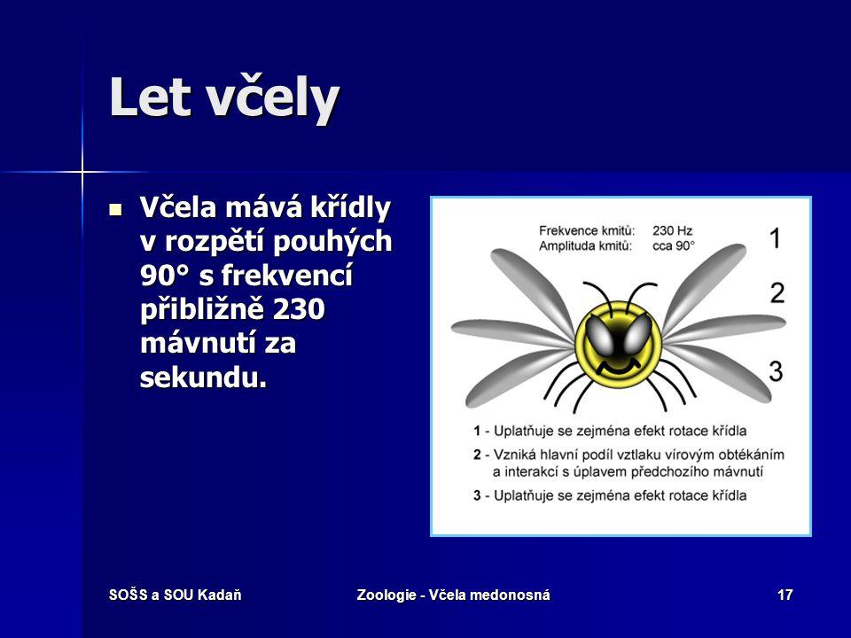 Zoologie - Včela medonosná