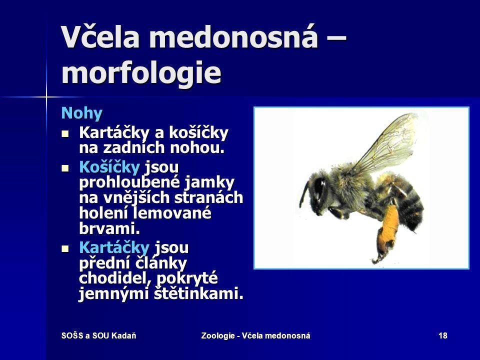Včela medonosná – morfologie