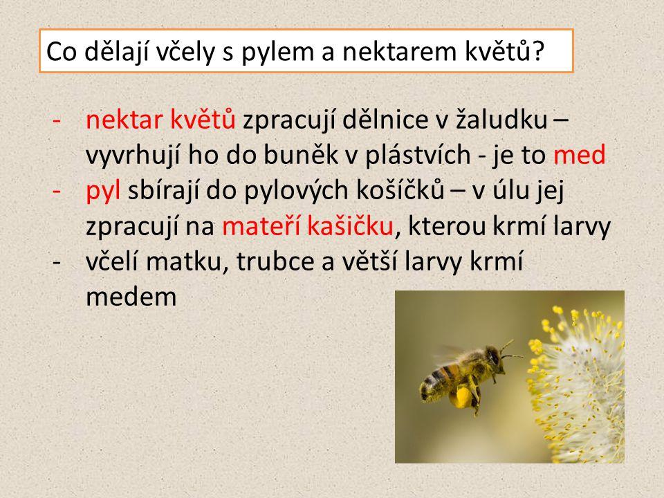 Co dělají včely s pylem a nektarem květů