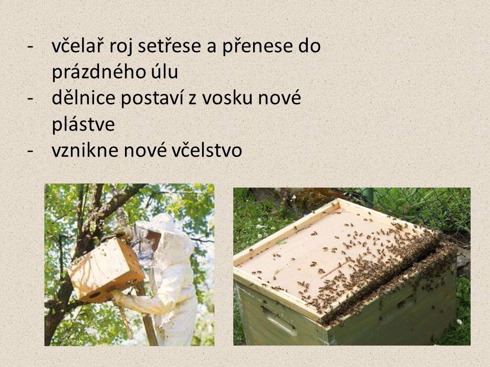 včelař roj setřese a přenese do prázdného úlu