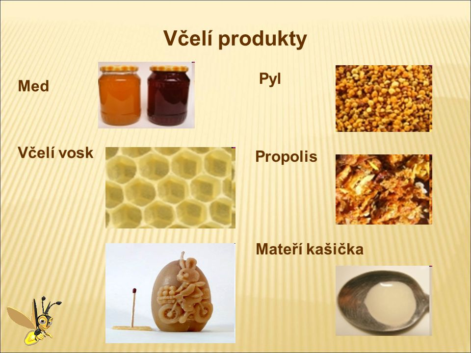 Včelí produkty Pyl Med Včelí vosk Propolis Mateří kašička