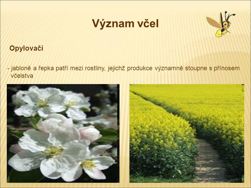 Význam včel Opylovači. jabloně a řepka patří mezi rostliny, jejichž produkce významně stoupne s přínosem.