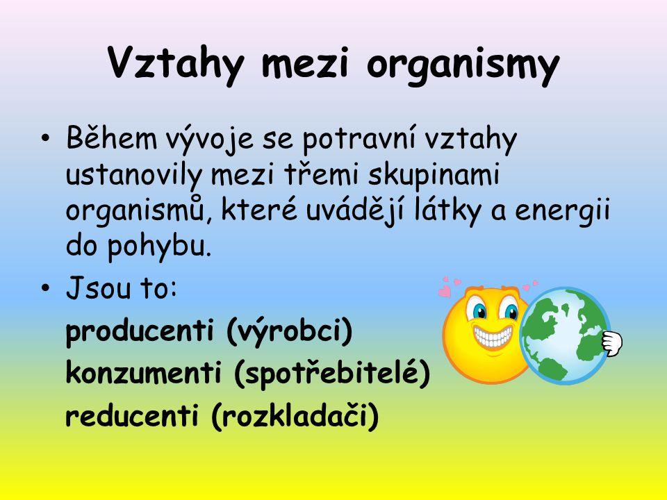 Vztahy mezi organismy Během vývoje se potravní vztahy ustanovily mezi třemi skupinami organismů, které uvádějí látky a energii do pohybu.