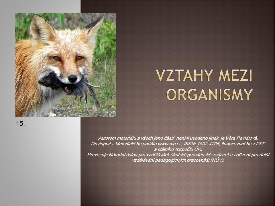 VZTAHY MEZI ORGANISMY 15.