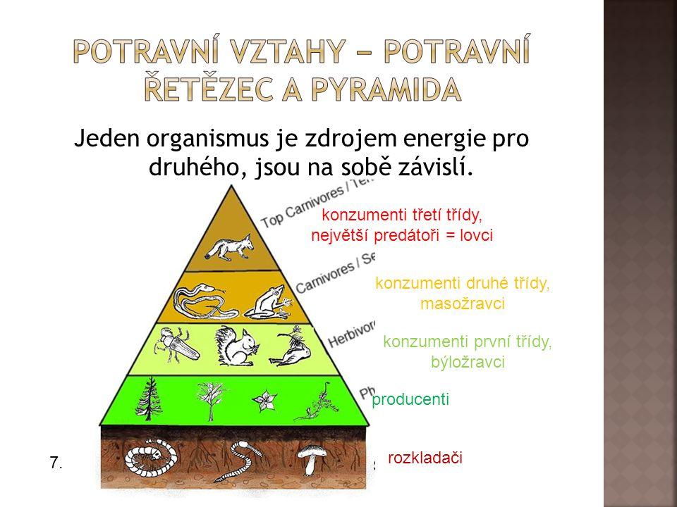 Potravní vztahy − Potravní řetězec a pyramida