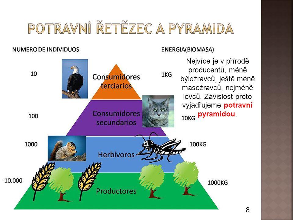Potravní řetězec a pyramida
