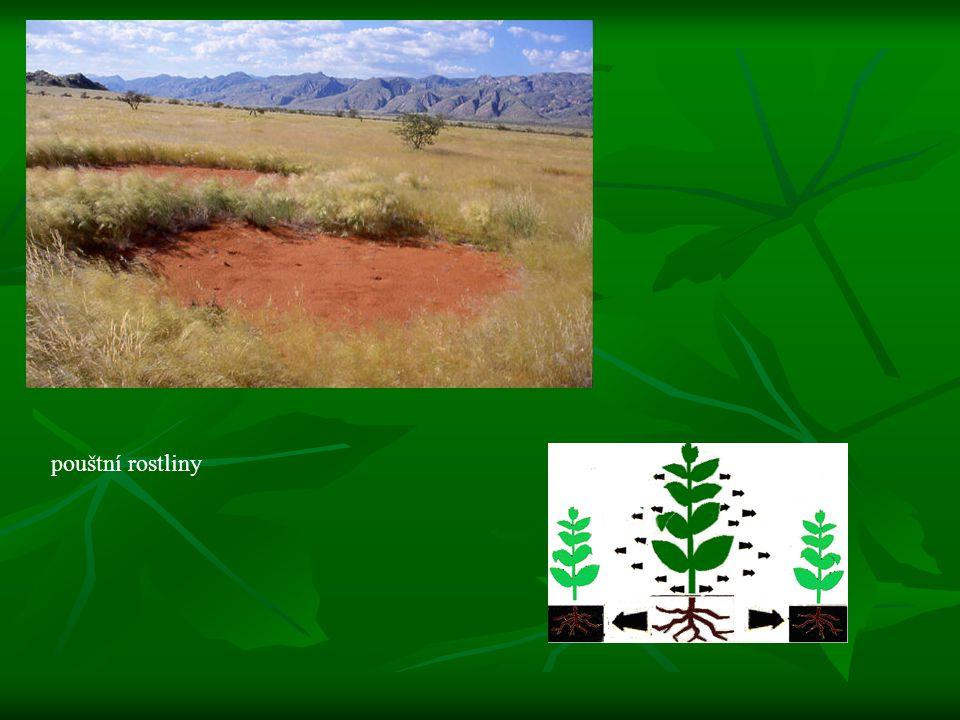 pouštní rostliny