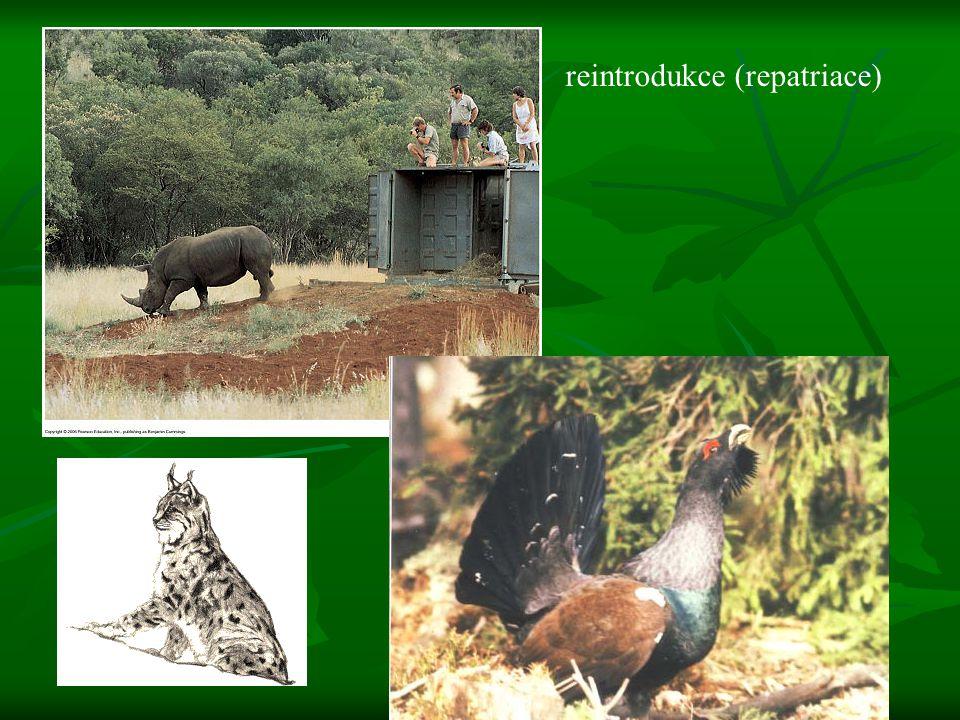 reintrodukce (repatriace)