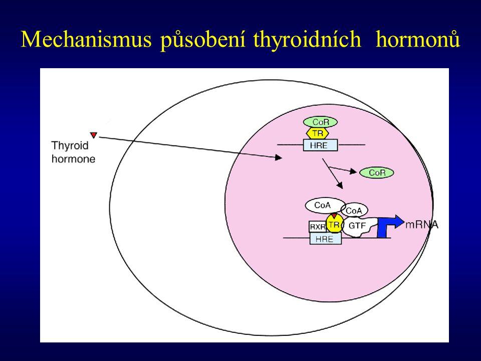 Mechanismus působení thyroidních hormonů