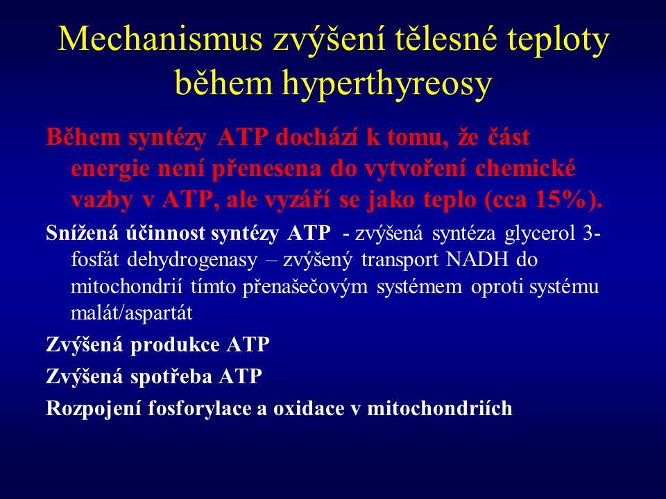 Mechanismus zvýšení tělesné teploty během hyperthyreosy