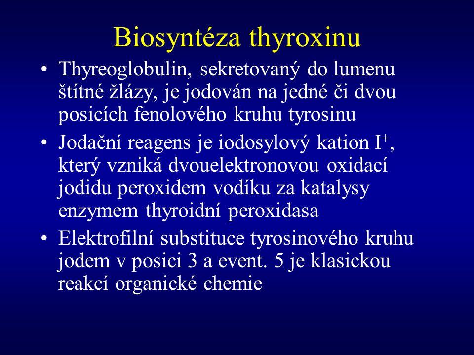 Biosyntéza thyroxinu Thyreoglobulin, sekretovaný do lumenu štítné žlázy, je jodován na jedné či dvou posicích fenolového kruhu tyrosinu.