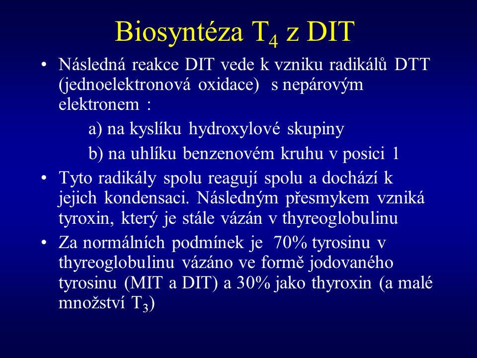Biosyntéza T4 z DIT Následná reakce DIT vede k vzniku radikálů DTT (jednoelektronová oxidace) s nepárovým elektronem :
