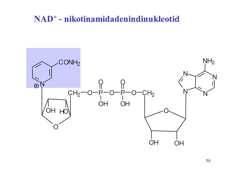 NAD+ - nikotinamidadenindinukleotid