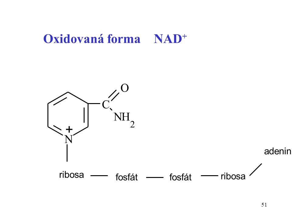 Oxidovaná forma NAD+ N C H 2 ribosa fosfát adenin + O